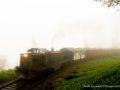 Ella _ Nanuoya_train_tour-4158