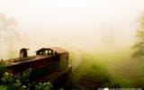 Ella _ Nanuoya_train_tour-4278