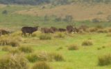 Horton Plains-3691