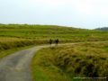 Horton Plains-3694