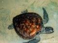 Kosgoda_turtle_farm-3499