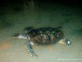 Kosgoda_turtle_farm-3505