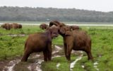 minneriya national park