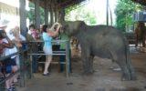 Pinnawala_elephanat_orphanage
