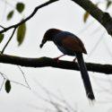 Sri_lanka_travel_partner_bird_photography_11