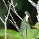 Sri_lanka_travel_partner_bird_photography_14