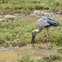 Sri_lanka_travel_partner_bird_photography_15