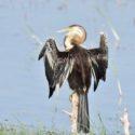 Sri_lanka_travel_partner_bird_photography_18