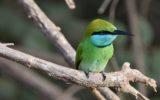 Sri_lanka_travel_partner_bird_photography_3