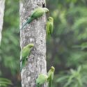 Sri_lanka_travel_partner_bird_photography_4