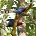 Sri_lanka_travel_partner_bird_photography_5