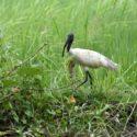 Sri_lanka_travel_partner_bird_photography_7