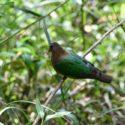 Sri_lanka_travel_partner_bird_photography_8