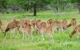 Srilanka_travel_partner_yala-04848