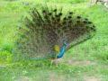 Srilanka_travel_partner_yala-04860
