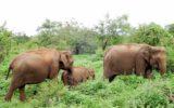 Srilanka_travel_partner_yala-04935