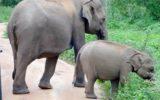 Srilanka_travel_partner_yala-04936