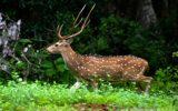 Yala_national_park-5577