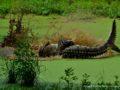 Yala_national_park-5594