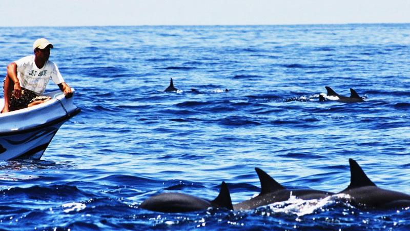 Kalpitiya Dolphin Watching