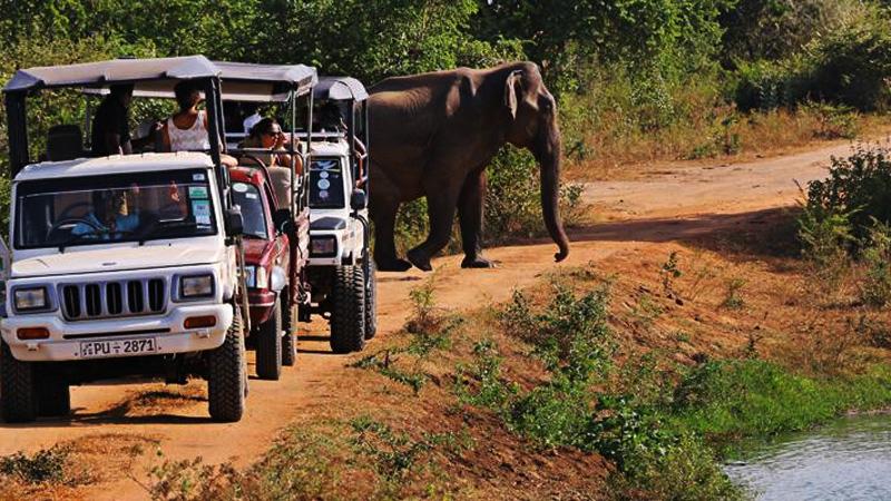 Udawalawa National Park Safari jeep