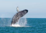 Whales_sea