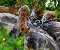 yala nationala park