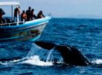 blue_whales