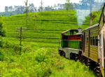 Sri lanka Train Tours22
