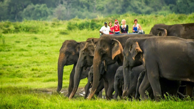 Image result for sri lanka holidays